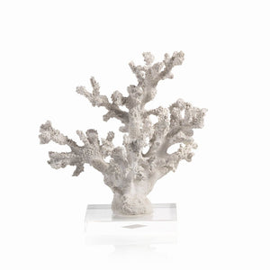 White Samar Coral on Acrylic Base
