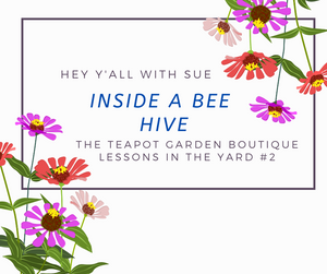 Hey Y'all with Sue - Inside a Beehive