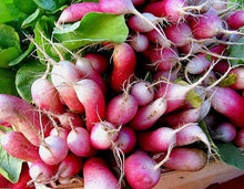 Load image into Gallery viewer, RADISH, RAPHANUS SATIVUS 'FRENCH BREAKFAST