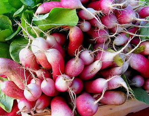 RADISH, RAPHANUS SATIVUS 'FRENCH BREAKFAST