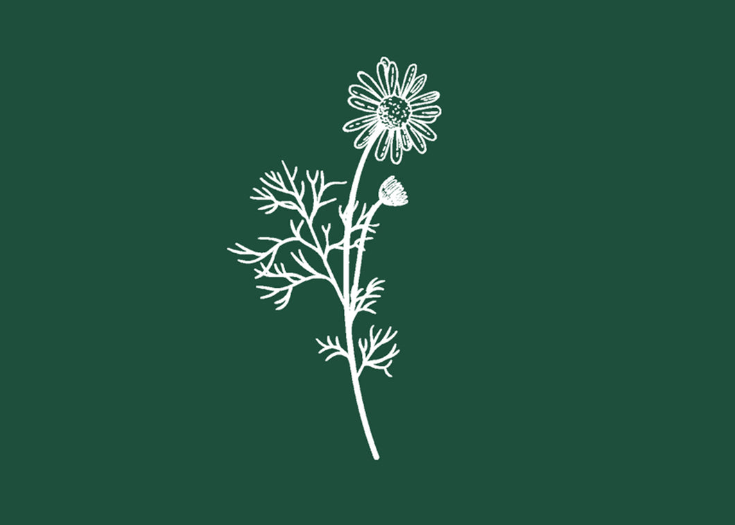 Wattle and Daisy Gift Card