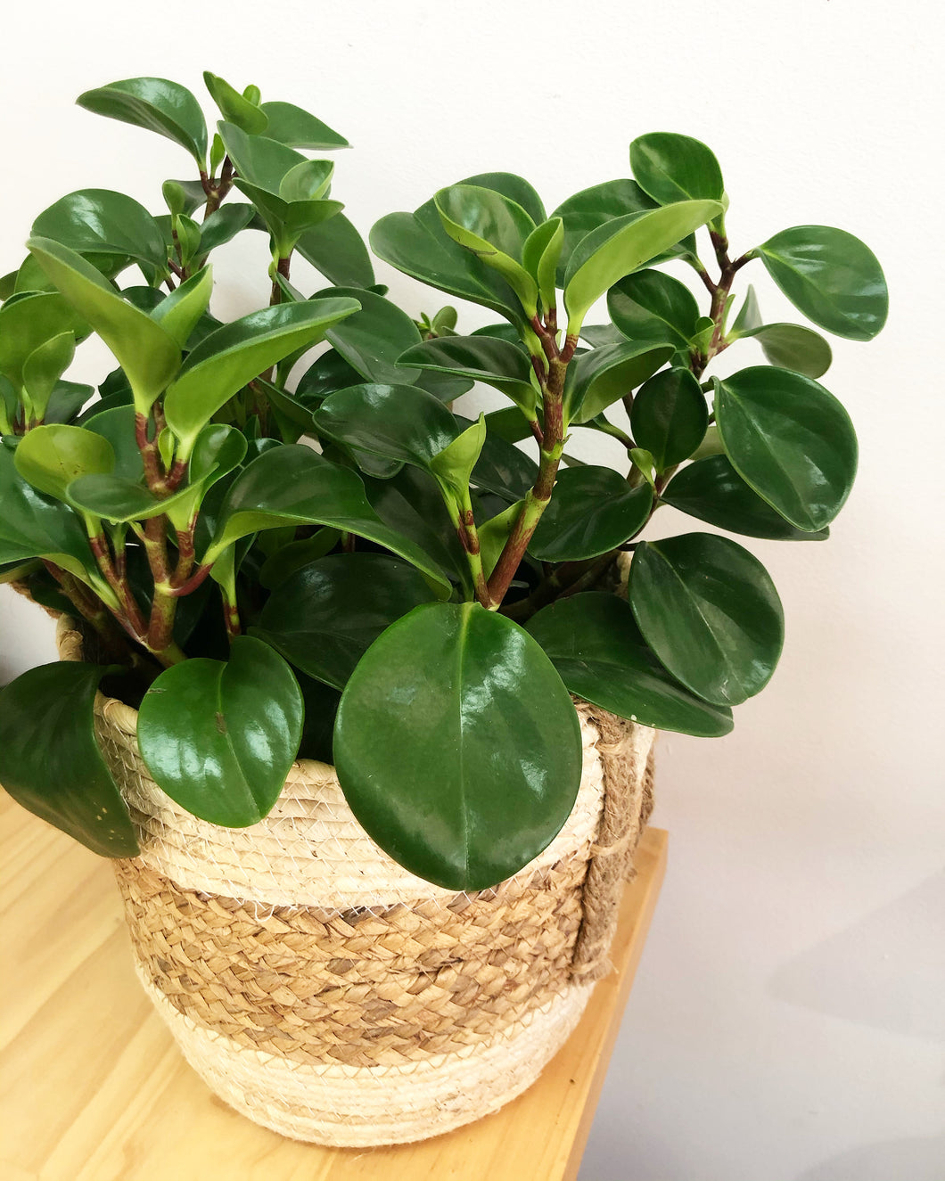 Mother's Day - Plant in Woven Basket (Pepperomia)