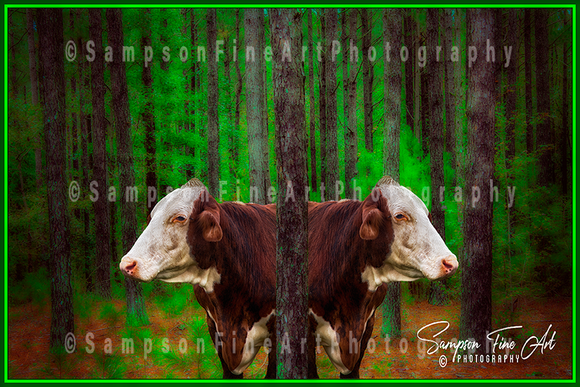 Cows in the Forest Color Photograph - sasyjamdesigns