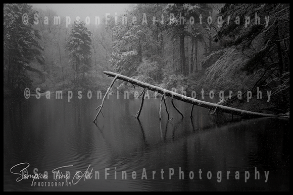 Fallen Tree in Snowstorm Black and White Photograph - sasyjamdesigns