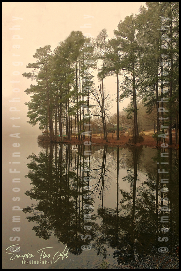 Morning Mist Trees Color Photograph - sasyjamdesigns