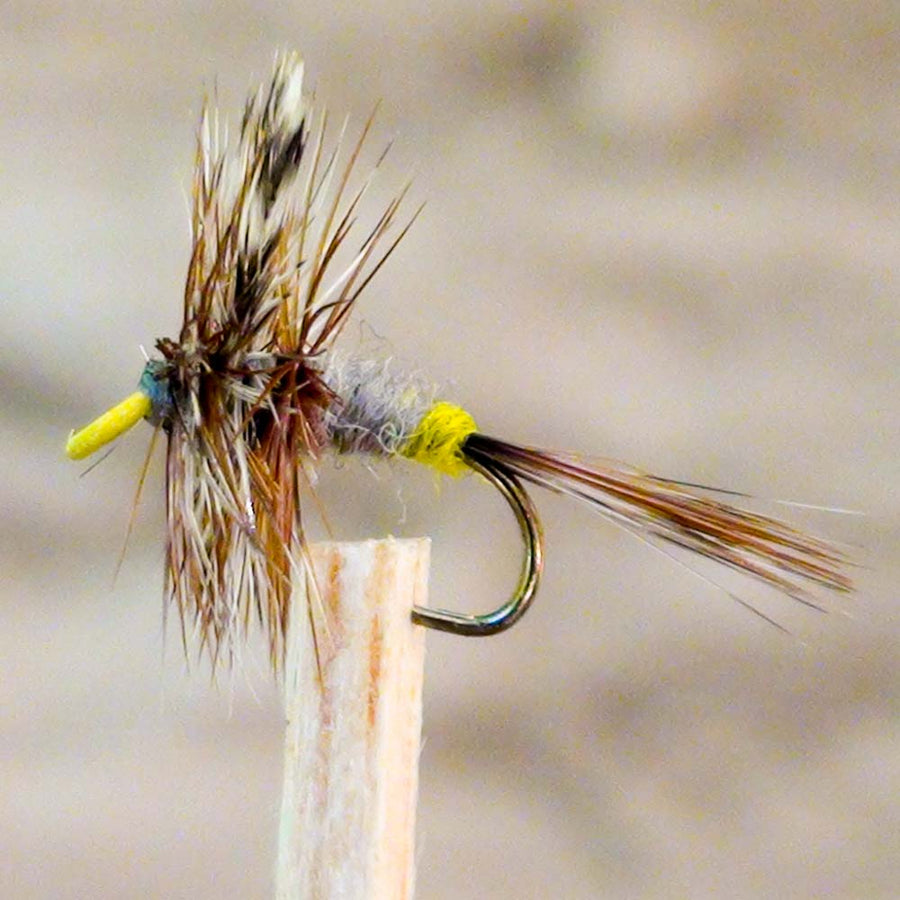 Adams Female Painted