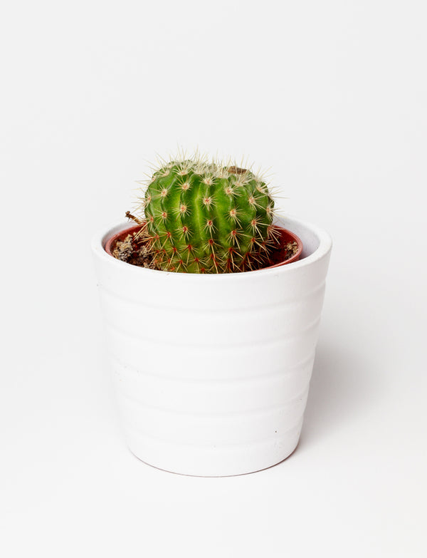 Artificial Succulent in Stand