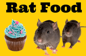 What to Feed Your Pet Rat