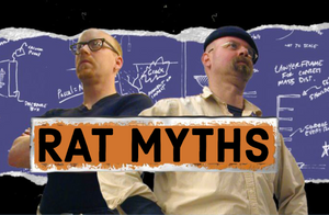 Top 5 Rat Myths