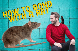 How to Bond With Your Pet Rats