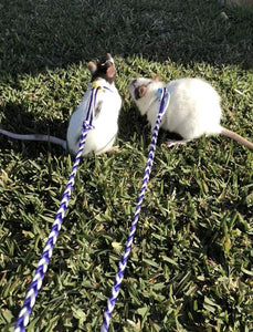 iGotRats Adjustable Rat Leash | Harness for Rats and Mice