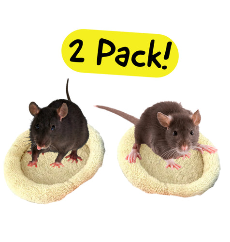 Rat Pad 2 Pack!