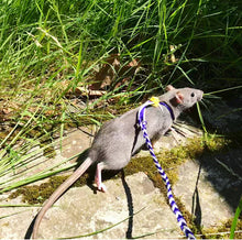 Adjustable Rat Leash