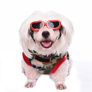 Sunglasses for Fido: Over the Top or Necessary?