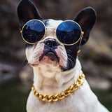 Dog wearing costume gold chain