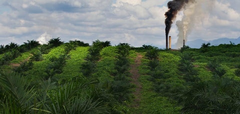 green fields with factories polluting the air