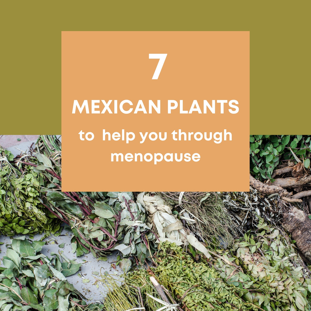 Mother Nature Guide: 7 Local Mexican Plants to help you through Menopause