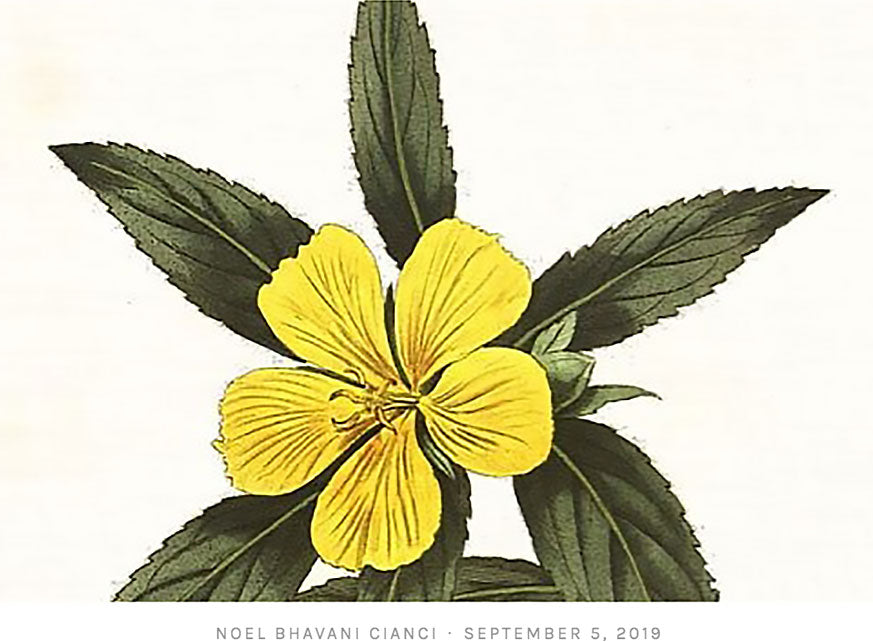 Flower Of Love - Damiana.  Elevating, sensual, and passion enhancing!