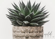 Load image into Gallery viewer, Aloe Succulent A0 (84.1Cm X 118.9Cm) / Colour Photographic