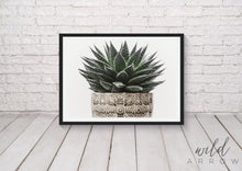 Load image into Gallery viewer, Aloe Succulent Photographic