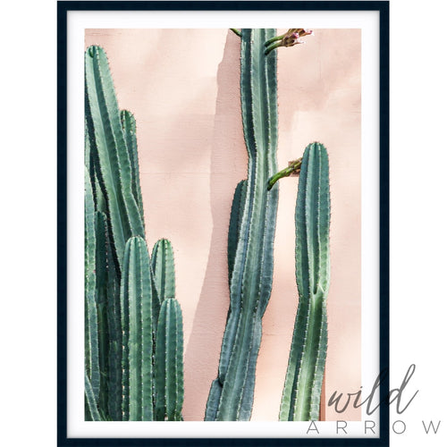 Cacti Photographic