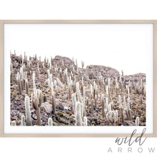Load image into Gallery viewer, Cactus Iii Photographic