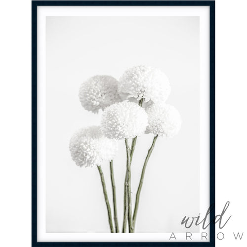 Chrysanthemum Photographic
