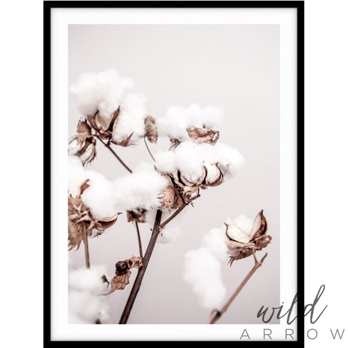 Cotton Plant Photographic