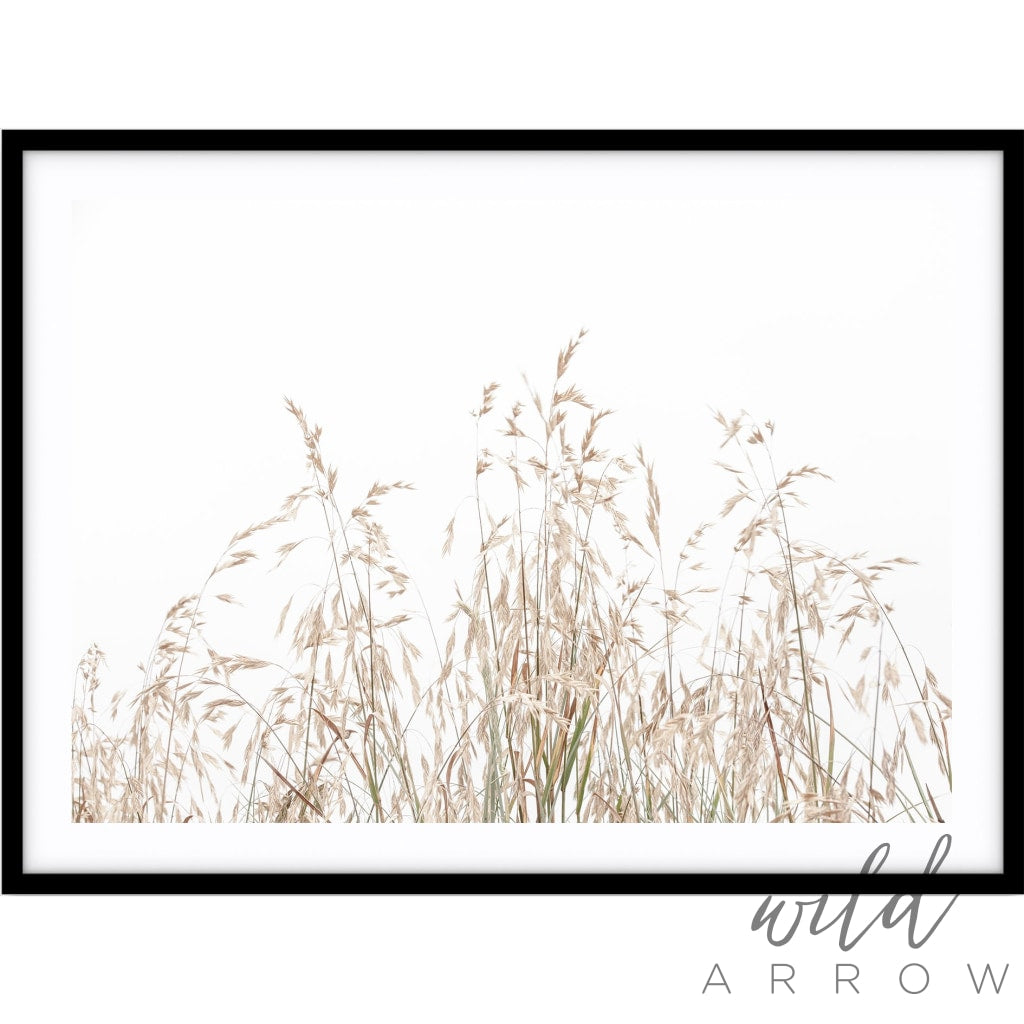 Country Grass Photographic