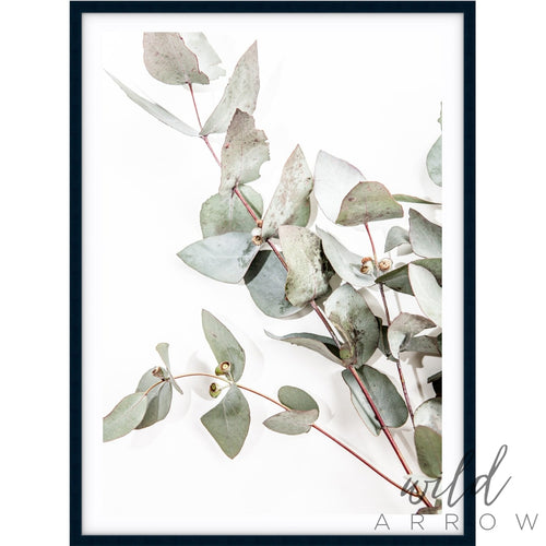Eucalyptus Leaves I Photographic