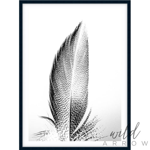 Feather I - B & W Photographic