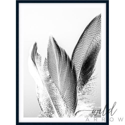 Feather Ii - B & W Photographic