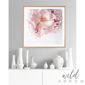 Full Bloom Peony - Square Photographic