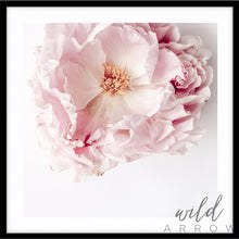 Load image into Gallery viewer, Full Bloom Peony - Square Photographic