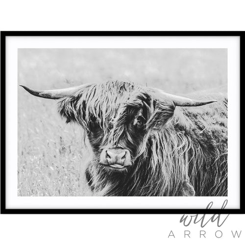 Highland Cow - B&w Photographic