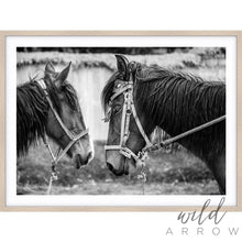 Load image into Gallery viewer, Horses Photographic