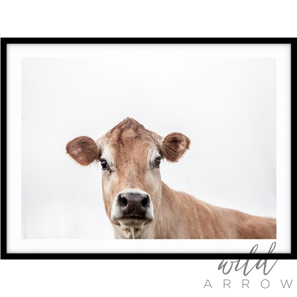 Jersey Cow Photographic