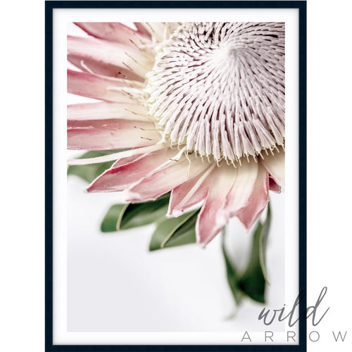 King Protea Ii Photographic