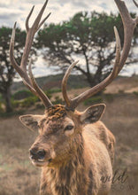 Load image into Gallery viewer, Majestic Deer A1 (59.4Cm X 84.1Cm) / Colour Photographic