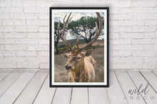 Load image into Gallery viewer, Majestic Deer Photographic