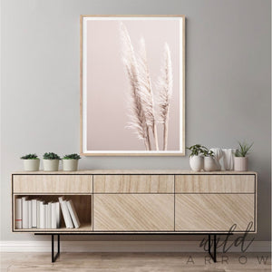 Pampas On Pink Photographic