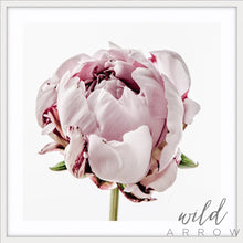 Load image into Gallery viewer, Peony - Square Photographic