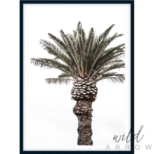 Pineapple Palm Photographic