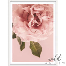 Load image into Gallery viewer, Pink Rose Photographic