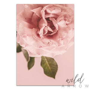 Pink Rose Photographic