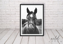 Load image into Gallery viewer, Reined Horse Photographic