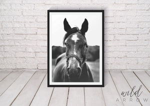 Reined Horse Photographic