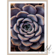 Load image into Gallery viewer, Succulent Iii Photographic