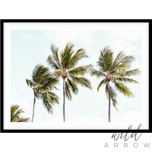 Tropical Palms Ii Photographic