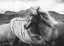 Load image into Gallery viewer, True Brumbies Print A1 (59.4Cm X 84.1Cm) / Black & White Photographic
